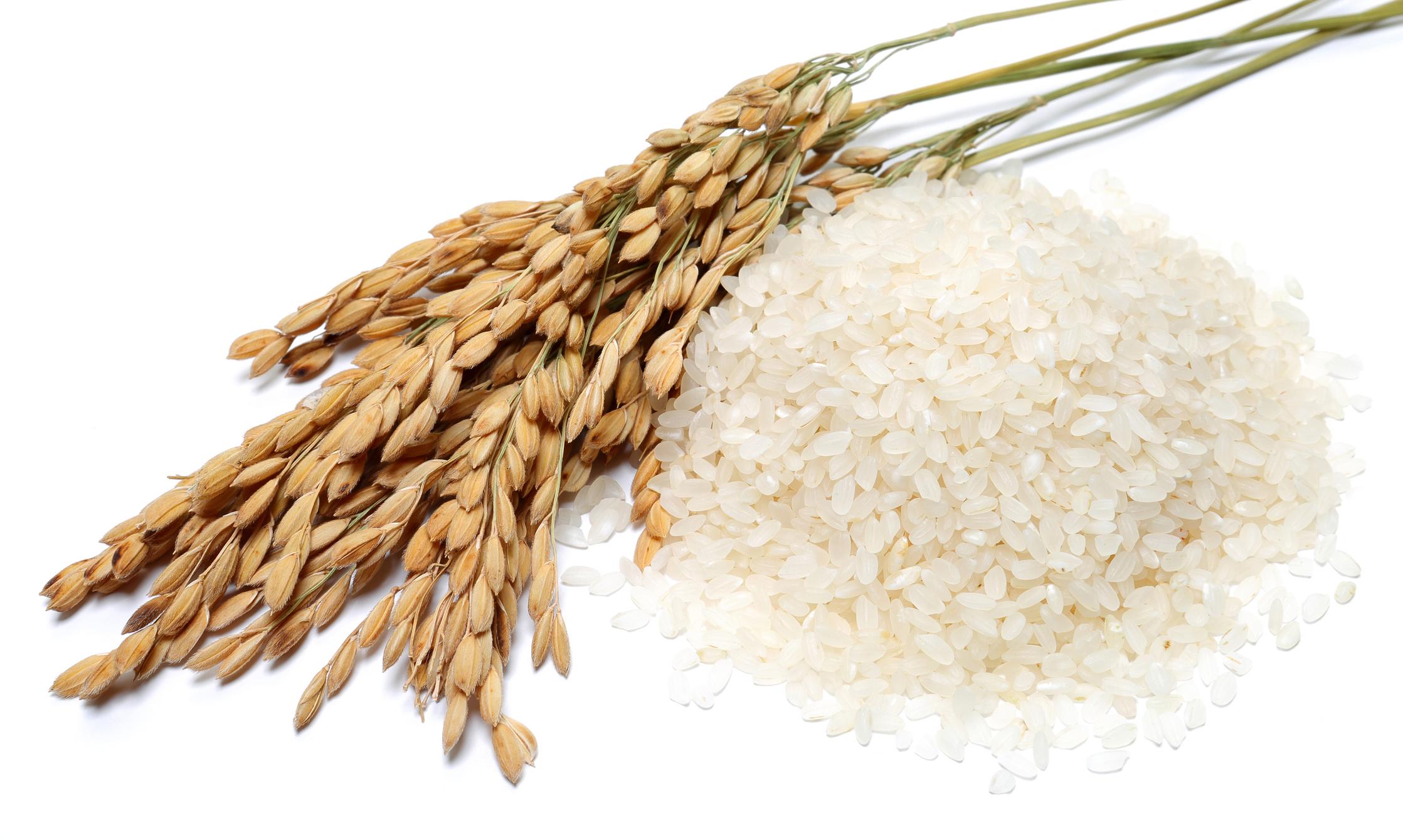 FT-NIR for Rice Analysis Image